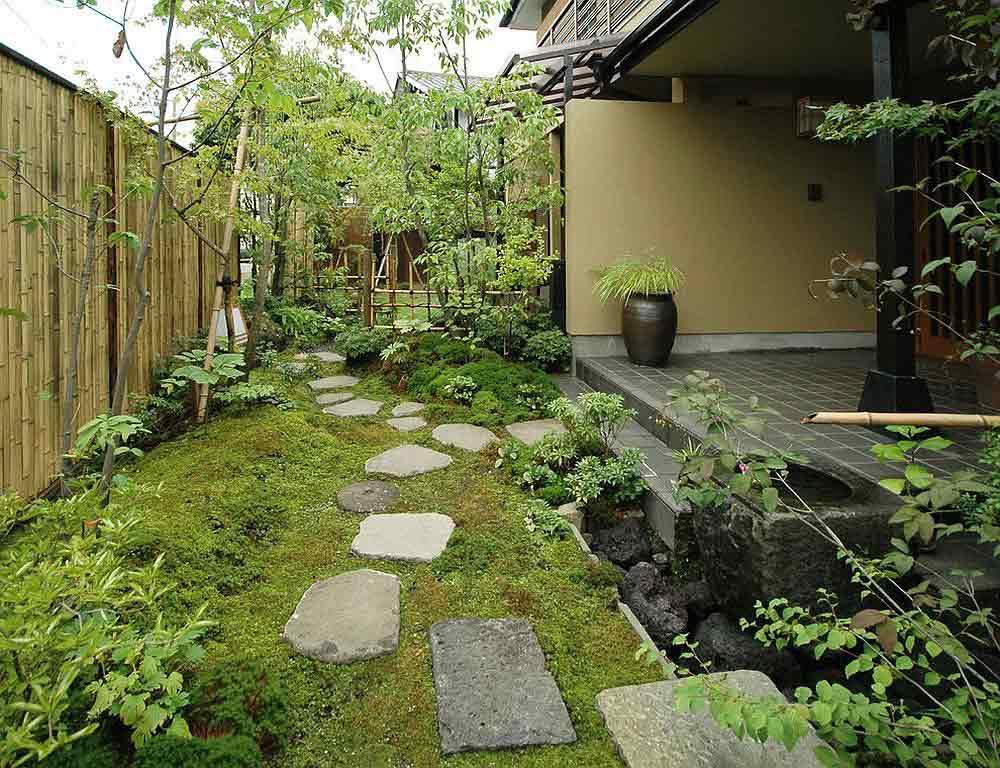 گیاه بامبو در باغ با طراحی آسیایی