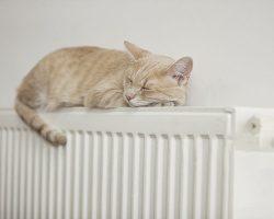 گربه در حال خواب روی شوفاژ حرارتی پنلی سفید