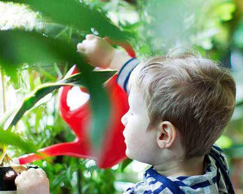 پسر بچه ای در حال آب دادن به گیاهان تصفیه کننده هوا خانگی