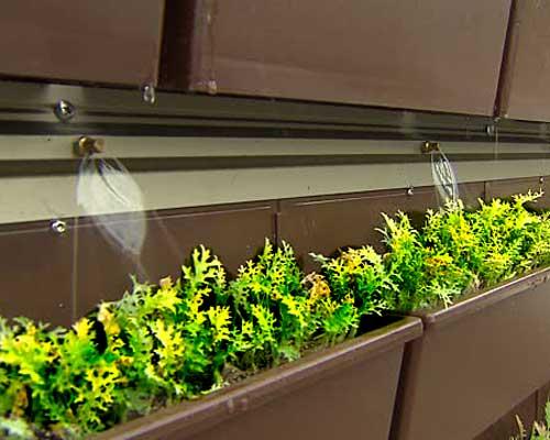 آبیاری گیاهانی که در روف گاردن اجرا شده اند با استفاده از آبیاری قطره ای
