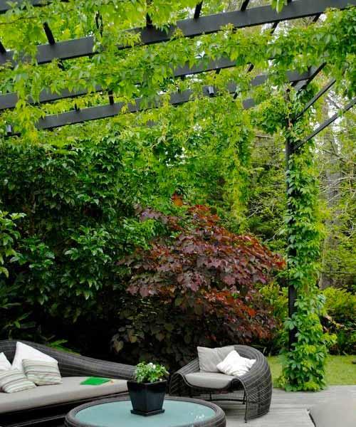 ایجاد حریم خصوصی با پوشش سبز روی سقف آلاچیق