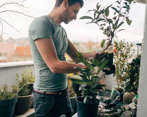مردی در حال کاشت گیاه در بام سبز ساختمان خود می باشد