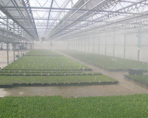 نصب دستگاه مه پاش گلخانه