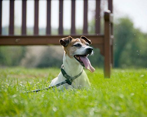 کاربرد چمن های مصنوعی برای نگه داشتن حیوانات خانگی مانند سگ