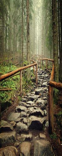 طرح مسیر سنگی در جنگل مه گرفته