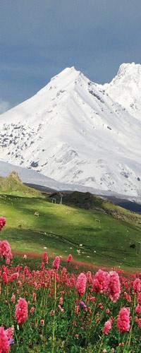 طرح گل صورتی در قله کوه برفی