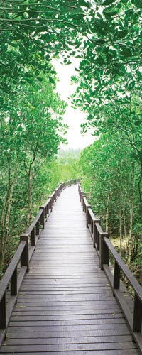 طرح پل چوبی در جنگل