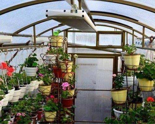 هیتر تابشی باشدت بالا در یک گلخانه نشان داده شده است