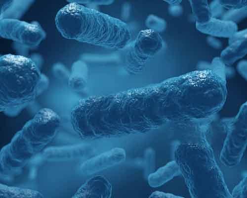 تصویرمیکروب های درون آب استخر