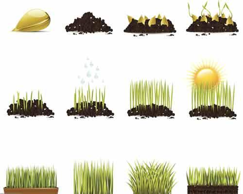 مراحل رشد گياه را نشان مي دهد که به مقدار زيادي نور آفتاب و آب و مواد مغذي و کود نياز دارند تا ديوار سبزبه خوبي توسعه يابد