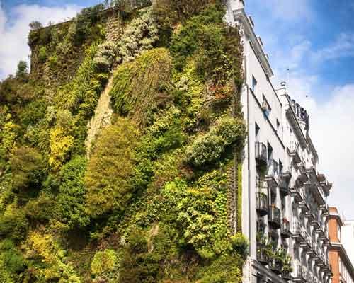 نمای سبز در انواع مختلف بر روي ديوار نصب شده اند برخي از آن ها به صورت يکپارچه بر روي ديوار کشيده شده اند و برخي ديگر به صورت گلدان هايي قابل مشاهده هستند