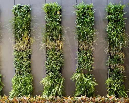 ديوار سبز که داراي چهارچوب هست و گياهان به صورت دسته بندي شده در داخل آن قرار گرفته اند و بهصورت عمودي ديوار را پوشش داده اند