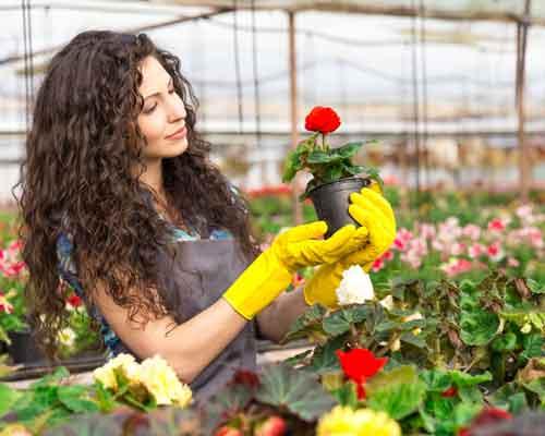 خانمي که در گلخانه است و در حال انتخاب گلدان مناسب براي ديوار پوشيده از گياه مي باشدو گلداني با گل رز را انتخاب کرده و در دست دارد