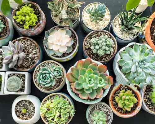 گونه هاي مختلفي از گياهان که در داخل گلدان ها کاشته شده است