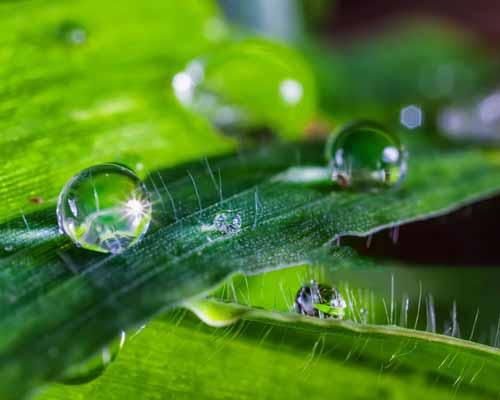 آب به صورت قطرات ريز بر روي گياهان قرار گرفته است و گياهان از آب تغذيه مي کنند