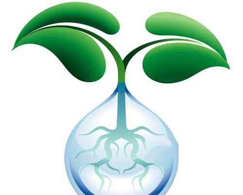 گياهي که ريشه آن در آب قرار گرفته است