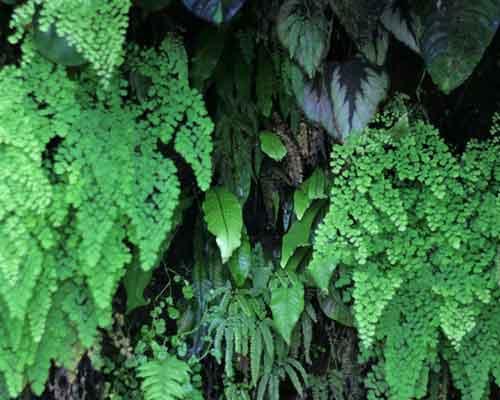 ديوار سبزي که بر روي آن گياهان متفاوتي کاشته شده است و گياهان بزرگتر بر روي گياهان زيرين سايه انداخته اند