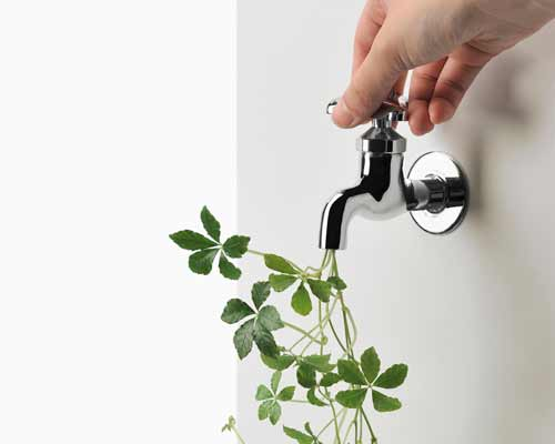 شير آب که گياهان ديوار سبز را به صورت دستي آبياري مي کند و در داخل شير گياهاني وجود دارد
