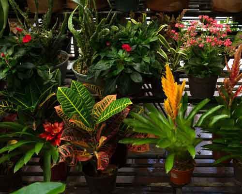 گلدان هايي که گل هاي متفاوتي در آن ها کاشته شده است و بر روي ديوار زنده نصب شده اند