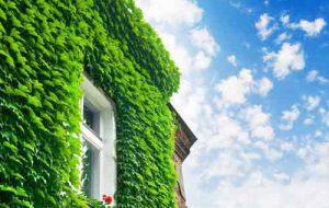 ديوار زنده با گياهان سبز که بر روي ديوار نصب شده اند و يک پنجره در داخل آن قرار گرفته است
